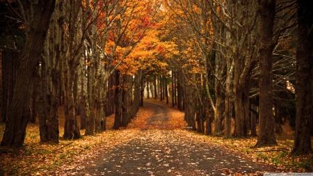 秋天的诗意