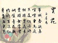 """白居易《买花》""""共道牡丹时,相随买花去""""原文赏析及翻译注释"""