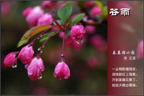 有关描写谷雨节气的古诗词
