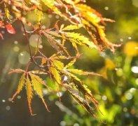 白居易五首经典的秋诗鉴赏