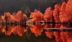最美的唐诗在秋天--七首唐诗鉴赏